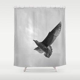 A Seagull Shower Curtain