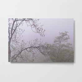 Mountain trees. Into the foggy woods Metal Print
