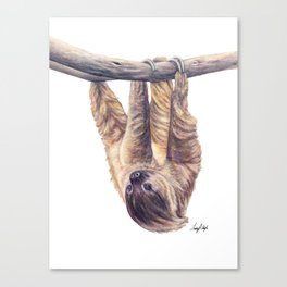 Wookie the Two-Toed Sloth Canvas Print