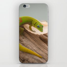 Green Gecko on Driftwood iPhone Skin