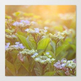 Sunset Hydrangea Canvas Print