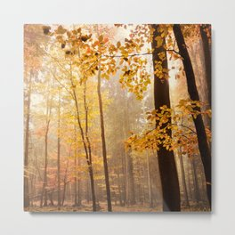 through the woods square Metal Print