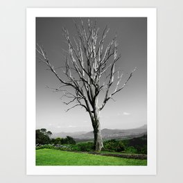 Blue Gum Tree Art Print