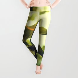 Morning Light Shining Through Branches Of Leaves Nature Photography Leggings
