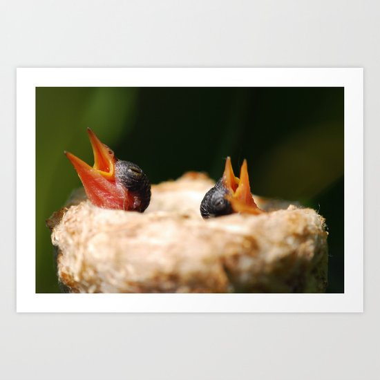 Two Baby Hummingbirds  Art Print