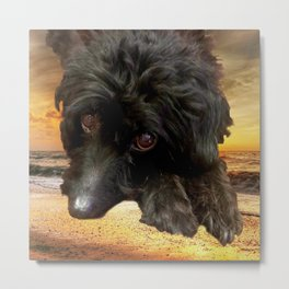 Dog Poodle and Sunset Metal Print