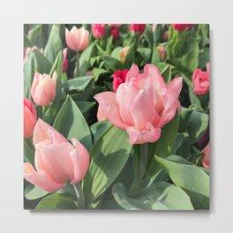 Tulip Field   Spring   Floral Art   Botanical   Flower Photography Metal Print