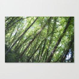 Portofino Park Canvas Print