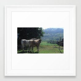 Cows water run Framed Art Print