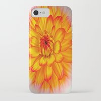 dahlia iPhone & iPod Cases featuring Dahlia by Art-Motiva