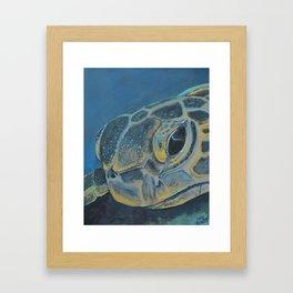 Hawksbill Framed Art Print