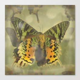 Green Yellow Tiger Swallowtail Butterfly Canvas Print