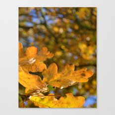 Yellow Oak Leaves Canvas Print