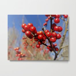 Winterberries glow against a blue autumn sky Metal Print