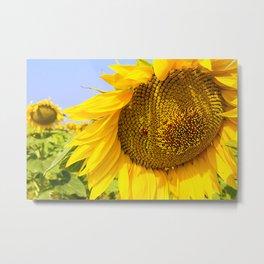 Varna Sunflower Field Metal Print