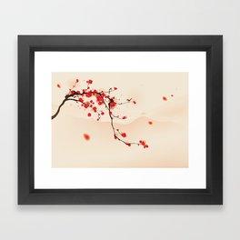 Oriental plum blossom in spring 003 Framed Art Print