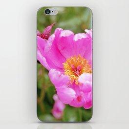 Grandpa's Flower iPhone Skin
