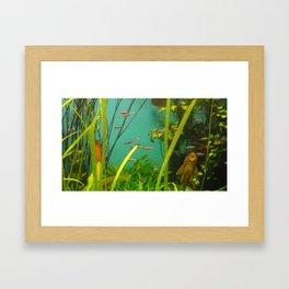 acvarium - fish kiss Framed Art Print