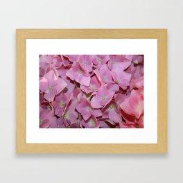 Pink Hydrangea Flowers Background Framed Art Print