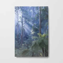 Tree ferns basking in evening light Metal Print