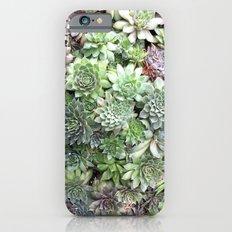 Desert Flower I Slim Case iPhone 6s