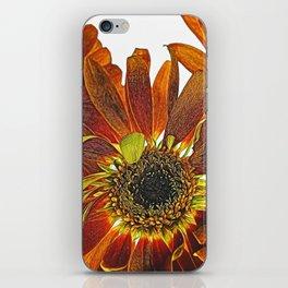 Orange Studio Flowers Photograph iPhone Skin