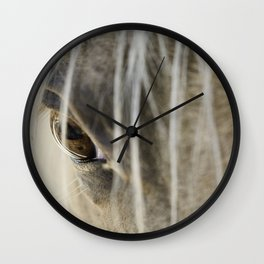 Stallions know Wall Clock