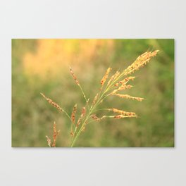 Summer Canvas Print