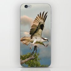 Osprey with nesting material iPhone & iPod Skin