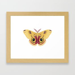 io moth (Automeris io) male specimen 1 Framed Art Print