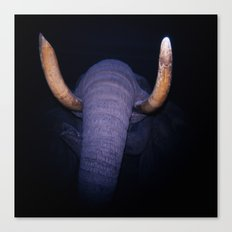 Elephant in the Dark Canvas Print