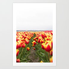Tulip Row Art Print