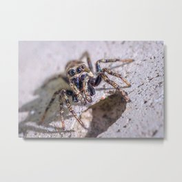 What's Shakin' Spidey? Macro Spider Photograph Metal Print