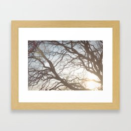 Dream Trees Framed Art Print
