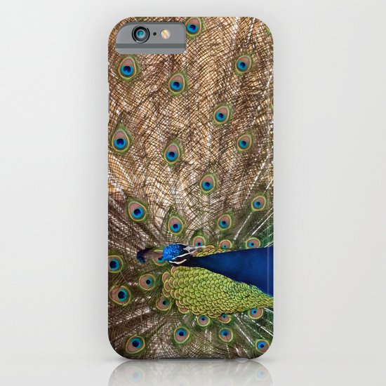 Indian Blue Peafowl iPhone & iPod Case
