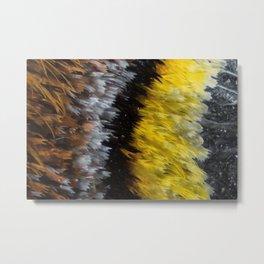 Moth Wing, Microscopic Metal Print