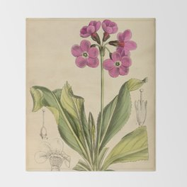Primula sinopurpurea 1918 Throw Blanket