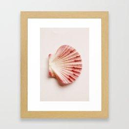 shells with leaves  Framed Art Print