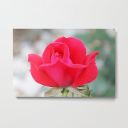 One Pink Rose In Bloom Metal Print