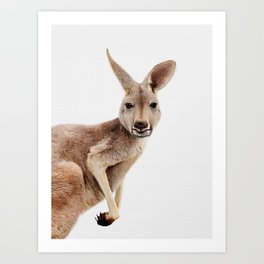 Kangaroo Print, Australian Animal Wall Art, Nursery Decor, Kids Room Poster Art Print