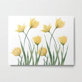 Yellow Woodland Tulips Metal Print