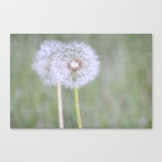 Dandelion Flowers Canvas Print