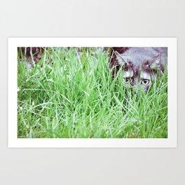 Hidden cat Art Print