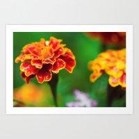 Beautiful Tagetes Flower Art Print