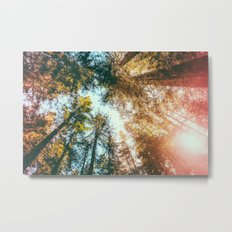 California Redwoods Sun-rays and Sky Metal Print