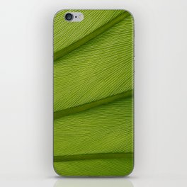 Green Leaf Texture 05 iPhone Skin