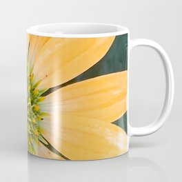 Peach Echinacea Garden Flower Digital Photography Coffee Mug