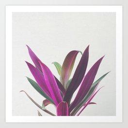 Boat Lily Art Print