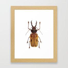 Macrodontia Cervicornis Sabertooth Beetle Framed Art Print