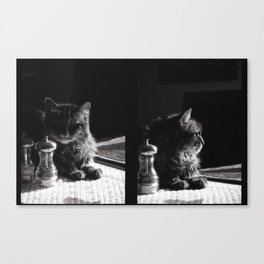 Salt Pepper and the Cat Canvas Print